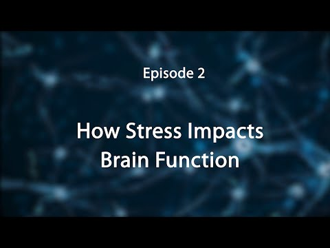 Stress, Trauma, and the Brain: Insights for Educators--How Stress Impacts the Brain