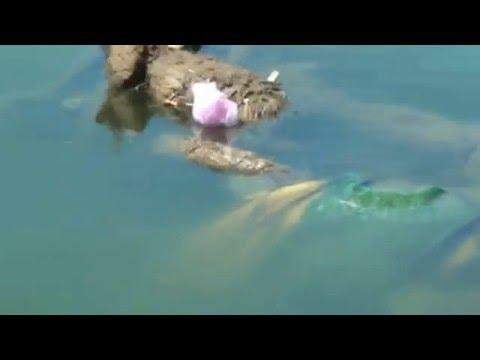 Pollution in Shahpura Lake Bhopal