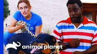 Dog Parents Insist On Using Heavy Chain Instead Of Leash   Cat vs. Dog by Animal Planet