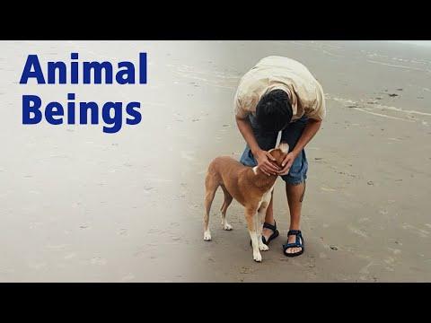 Gautam Sachdeva Video: Animal Beings