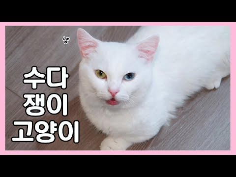 수다쟁이 고양이 꼬부기 🐱 видео