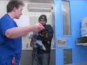 Watch the PDSA Working Together Video