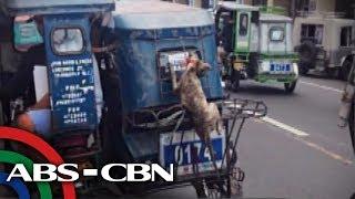 Nag-alala ang ilang taga-Naga City nang makita ang isang aso na halos masakal at mahulog habang nakatali sa likod ng...