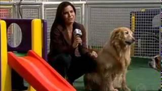 Vila dos Cães - Matéria Record hospedagem