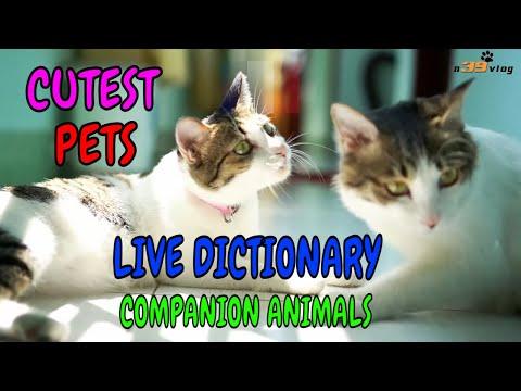 Thú Cưng - Live Dictionary