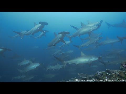 Banda Sea | Diver's dream- Ambon - Banda - Ambon cruise with Black Manta 29 OCT - 5 NOV 2015