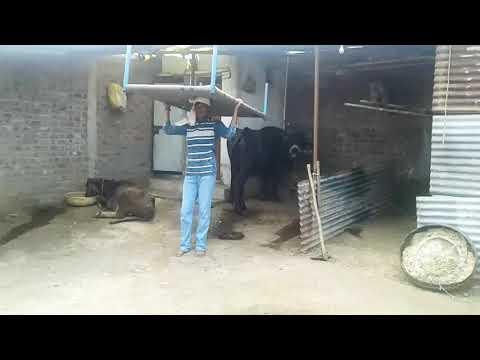 Video या खाट केतरा की // निमाडी कामेडी // nimadi comedy// satish hemraj hatola fatyapur// download in MP3, 3GP, MP4, WEBM, AVI, FLV January 2017