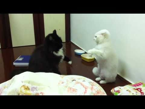 黑白貓咪猜拳大對戰!結果...好可愛!
