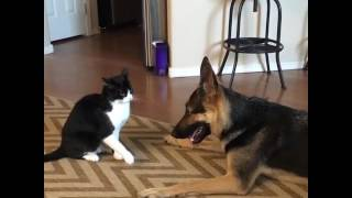 animale cainele si pisica
