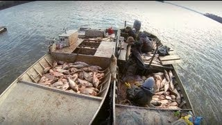 Nonton Carp Madness   Commercial Fishing Tournament Film Subtitle Indonesia Streaming Movie Download