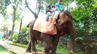 Video Serunya Pertama Kali Naik Gajah di Kebun Binatang Bandung saat Yaya Liburan Part 2 MP3, 3GP, MP4, WEBM, AVI, FLV Januari 2019