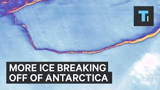 The giant crack that's been racing across Antarctica Larsen C ice shelf finally met its breaking point between July 10 and 12. The result was an iceberg the size of Delaware and weighing a trillion metric tons. But that's not the end of the story. In fact, it could be the beginning of a more important, more dangerous story. The iceberg that broke off — dubbed A68 — was just one piece of the much larger Larsen C ice shelf. Now, scientists want to know how stable is the ice shelf that has been left intact, connected to the Antarctic continent. Recent satellite images suggest that pieces of the remaining ice shelf are already preparing to break off, creating more, smaller icebergs that will join Iceberg A68.Moreover, a new crack has formed close to where the old crack left off. And it's headed for Bawden Ice Rise, which is a critical anchor point for the ice shelf. Scientists aren't certain the crack will reach Bawden Ice Rise, but they are keeping a close eye on it, nevertheless. Read more: http://www.businessinsider.com/saiFACEBOOK: https://www.facebook.com/techinsiderTWITTER: https://twitter.com/techinsiderINSTAGRAM: https://www.instagram.com/businessinsider/TUMBLR: http://businessinsider.tumblr.com/
