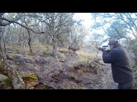 LOS MEJORES LANCES DE CAZA | Los lances mas vistos de Caza Tv Spain #050