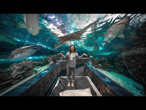 WE SLEPT WITH SHARKS (overnight in an aquarium)