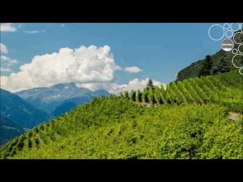 Weinland Südtirol - Weinbau in hohen Lagen