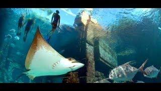 Download Lagu Atlantis Aquarium Bahamas Mp3