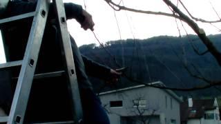 #293 Schneiden im Garten 2011 - Apfelhochstamm Wildmauser 4v6