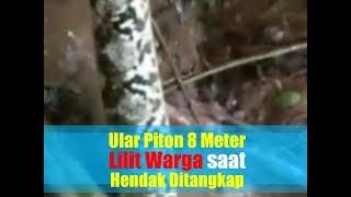 Video Video Detik-detik Ular Piton 8 Meter Lilit Warga saat Hendak Ditangkap MP3, 3GP, MP4, WEBM, AVI, FLV Mei 2019