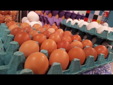 Todo sobre la producción de huevos