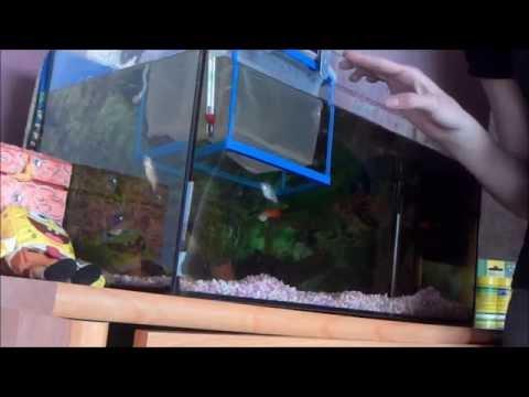 comment nettoyer aquarium betta la r ponse est sur. Black Bedroom Furniture Sets. Home Design Ideas