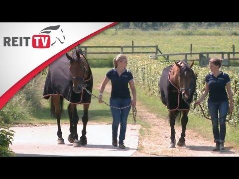 Pferdedecken: So findest du die passende Decke für dein Pferd