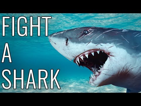 Video How To Fight A Shark - EPIC HOW TO download in MP3, 3GP, MP4, WEBM, AVI, FLV January 2017