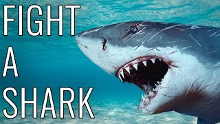 What other EPIC stuff do you want to learn? ►► Subscribe! http://brrk.co/AWEsubLearn everything you need to know about how to fight a shark!Tell us in the comments what you want us to teach you next!If you rely on the information portrayed in this video, you do so at your own risk and you assume the responsibility for the results. You hereby release Break, its parents, affiliates subsidiaries, and any person included in this programming expressly or implicitly from any and all actions, claims, or demands that you, your heirs, distributees, guardians, next of kin, spouse or legal representatives now have, or may have in the future, for injury, death, property damage, or any other liability that may result related to the information provided in this video.Starring Joe Bereta - http://twitter.com/joeberetaEpisode Animated by Andy Mogren http://youtube.com/user/AndyMogrenWritten by Matthew Brian CohenWritten by Matthew Brian CohenProduced by Joe Bereta and Michael Rainey - https://twitter.com/raineymichaelvExecutive Producer - Andy Signore - http://twitter.com/andysignore