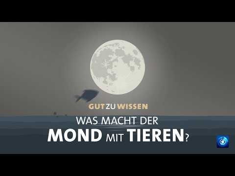 Was macht der Mond mit Tieren?