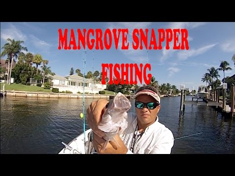 Saltwater – Stuart Live Bait Fishing for Mangrove Snappers – HD # 30 – Daniel Pierlet