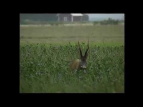 Höje Jakt o Upplevelser. Film av YourHunt (www.yourhunt.se)