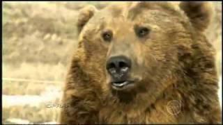 Znalazł młodego niedźwiadka obok jego zmarłej matki. To, co zwierzę robi z nim później, odbiera mowę.