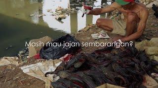 Video Ngeri! Ikan di Ciliwung Jadi Bahan Baku Jajanan MP3, 3GP, MP4, WEBM, AVI, FLV November 2018