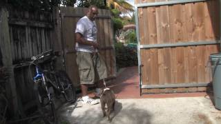 Dog Training : How To Train Your Puppy To Stay In The Yard