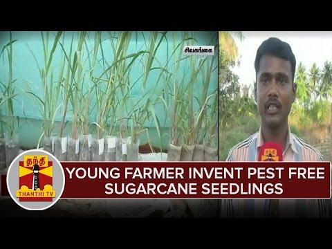 Farmer-Invent-Pest-Free-Sugarcane-Seedling-in-Sivagangai--Thanthi-TV