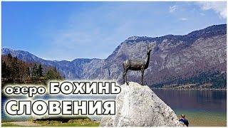 Bohinjsko Jezero Slovenia  city images : Словения. Озеро Бохинь / lake Bohinj Slovenija / Bohinjsko jezero, Slovenija