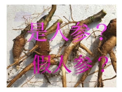土人蔘,参菜、水人参、紫人参、福参、习称栌兰,根入药。