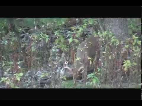 SCSTV S01E22 PA Deer