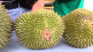 Karak Malaysia  City pictures : Musang King Durian Karak Malaysia