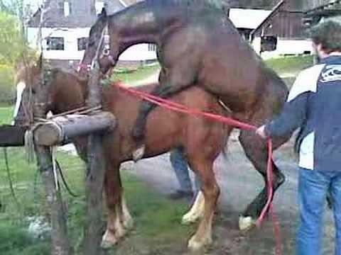 jebanje - konji.