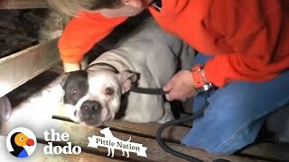 People Find PIT BULL Chained in the Basement of New Home | The Dodo Pittie Nation by The Dodo
