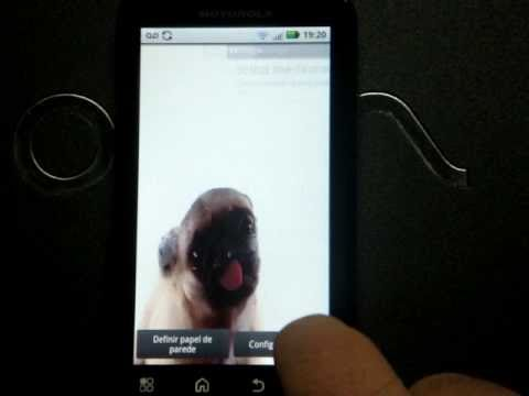 Video of Android Pet
