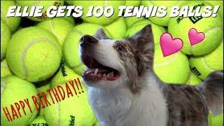 SURPRISING MY DOG WITH 100 TENNIS BALLS | HAPPY BIRTHDAY ELLIE! by Maddie Smith