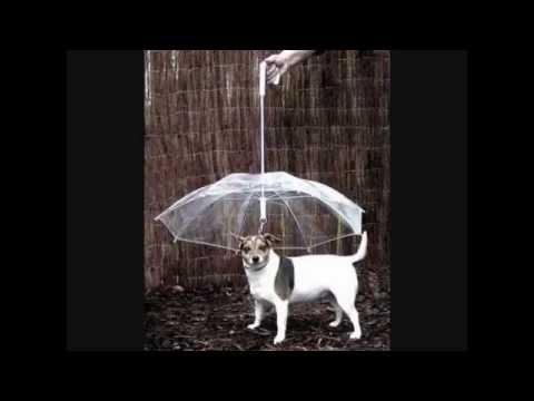 Ombrello per cani - Dog Umbrella - eTrendy