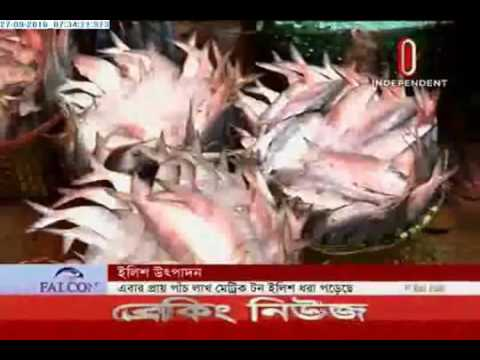 1 lakh metric tonnes of hilsa netted (27-09-2016)