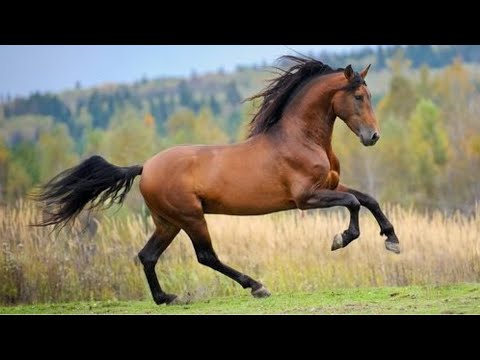 Horse SOO Cute! Cute And funny horse Videos Compilation cute moment #37