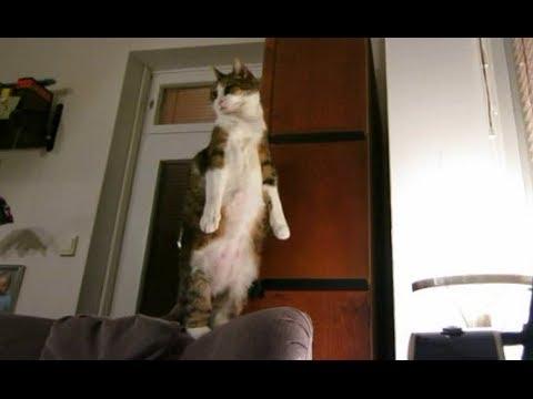 超人性化的貓~我就是喜歡站著伸懶腰~~
