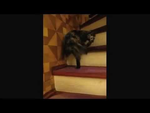 video de un gato subiendo escaleras dando vueltas