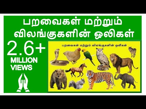 Tamil Rhymes Learn Birds and Animals Sound for Children