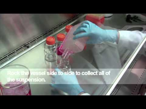 Harvesting cells from the HYPERFlask® Vessel - Part 4 (English)