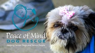 PEACE OF MIND DOG RESCUE | PACIFIC GROVE, CA